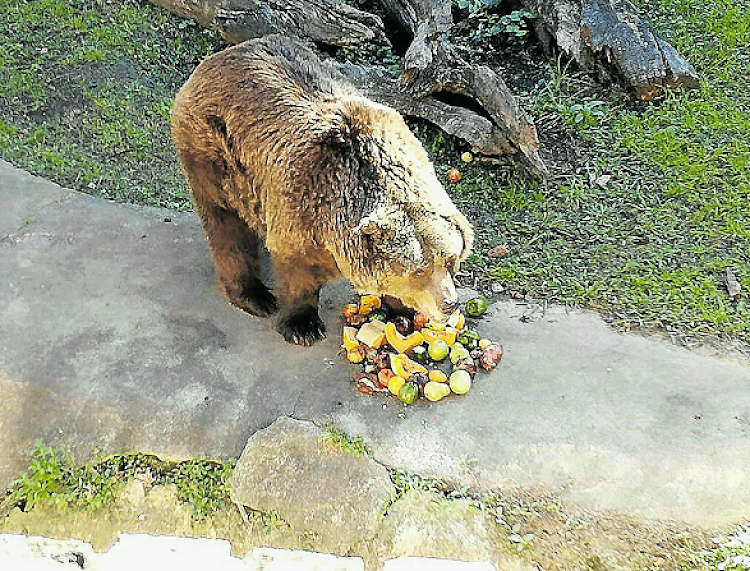 The EL Zoo bears are much healthier, according to Lionel de Lange of LAOE Ukraine, who credits it mostly to diet change.