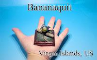 Bananaquit ‐Virgin Islands, US‐