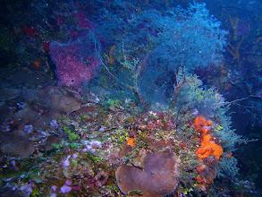 Photo: Coral Garden