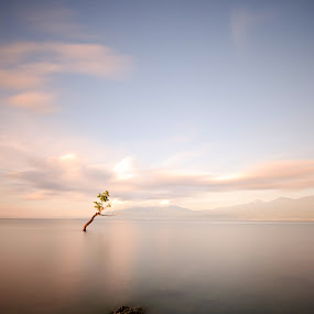 Minimalist by Jhim Abucayon - Landscapes Waterscapes ( mangroove, seascape )