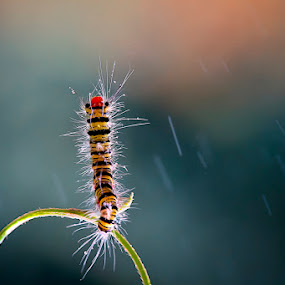 acrobatik in rainy by Ian Reducer - Animals Insects & Spiders