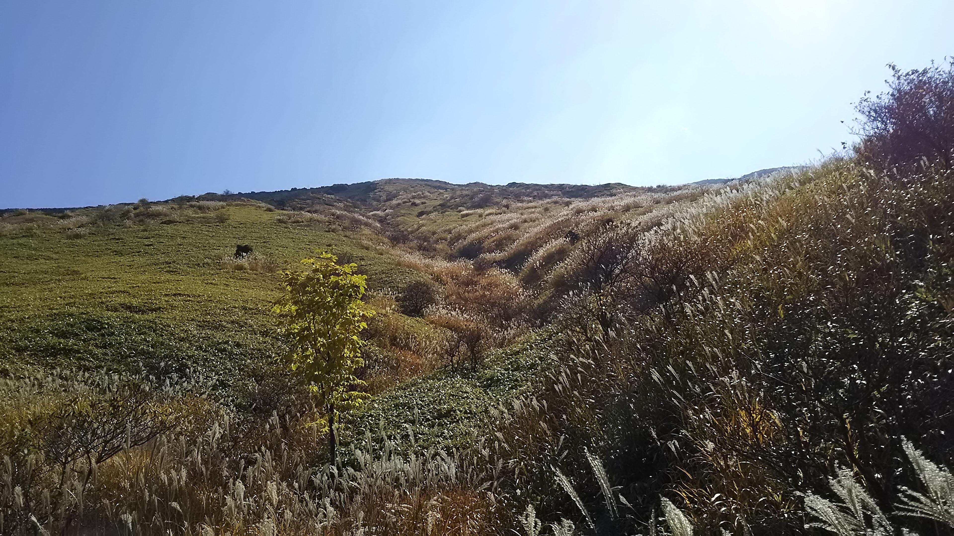 ススキと笹の斜面