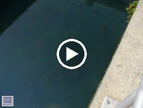 Video: Trying to zoom in on a fish in the basin