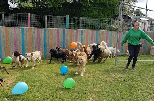 Doggy daycare celebrates VE Day!
