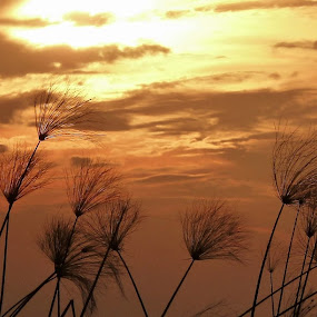 Sunset Over Okavango Grasses by Leigh Thomson - Nature Up Close Leaves & Grasses ( clouds, botswana, orange, colors, travel, landscape, okavango delta, grasses, adventure, silohuettes, nature, sunset, safari, africa, reeds )