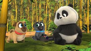 Puppies and Pandas; Orange You Glad? thumbnail