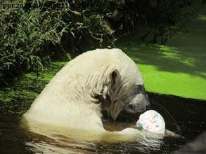 Photo: Da ist er ja wieder, der Ball :-)