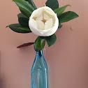 pretty please magnolia