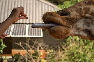 Photo: Giraffe Centre (Karen, Nairobi)