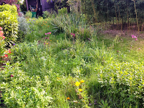 Photo: Naturgarten Düsseldorf Lohausen, der ehemalige Plattenweg ist überwachsen mit Gräsern und Stauden