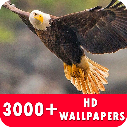 Eagle Live Wallpapers HD