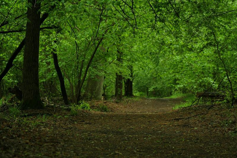 Verde primavera di Gp