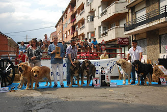 Photo: XXXII Monografica Nacional de Mastin espanol competience of couples 2nd Ydalgo and Sofia Tornado Erben photo Annelie Issakson