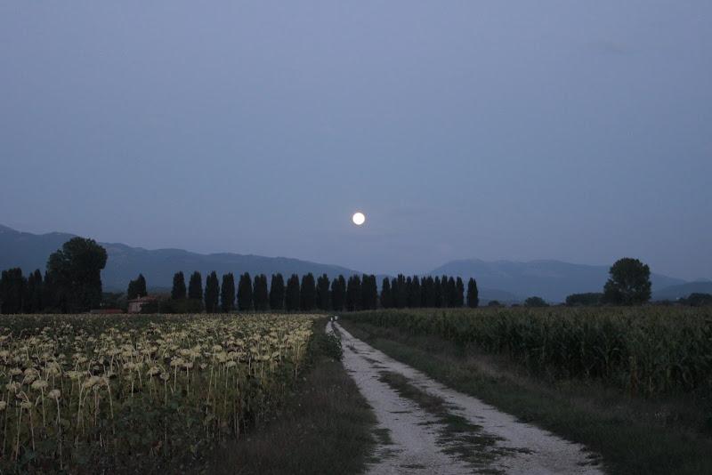 Chiaro di Luna di maxxxy