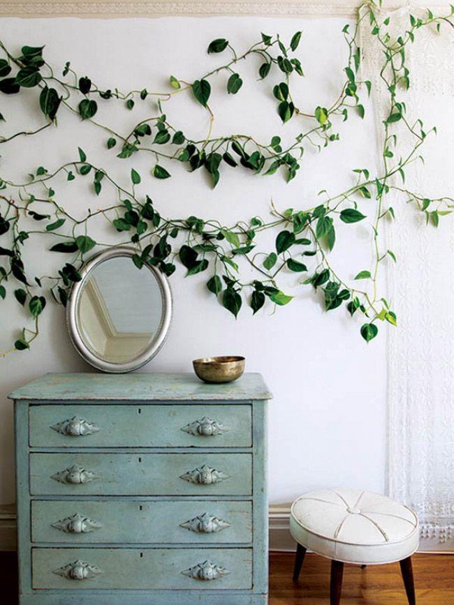 plantas-adornar-paredes