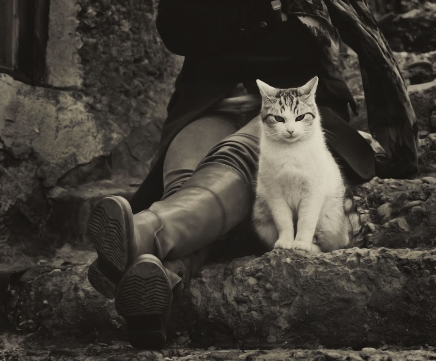 by Marija Cekrlic - Animals - Cats Portraits