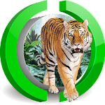 Delightful Tiger Live WP