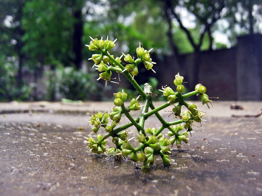 by Areej Khalid - Nature Up Close Other plants ( plant, fallen, green, blur, garden,  )