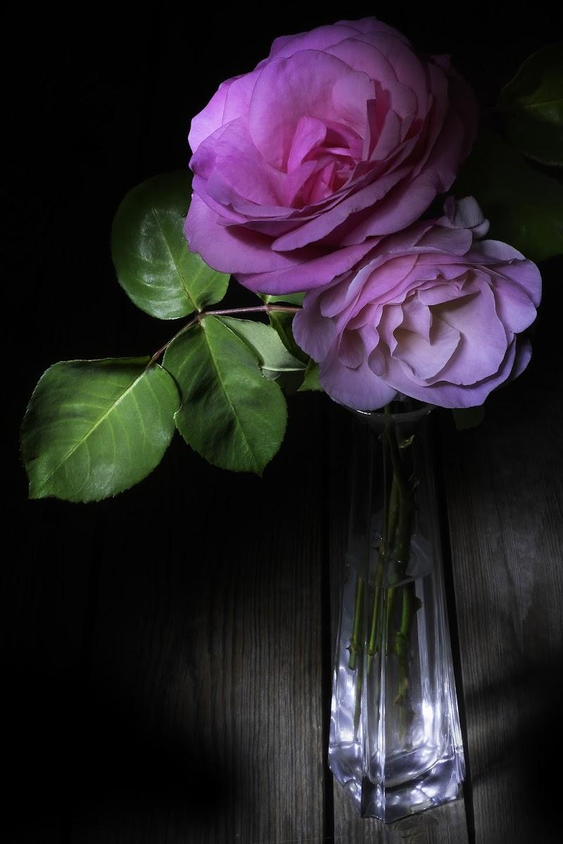 Ben venga Maggio, ben venga la rosa, che è dei poeti il fiore di Sergio Locatelli