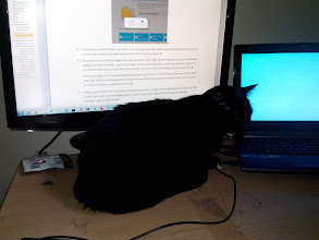 Photo: When Fred wants attention, he doesn't care if I have work to do....