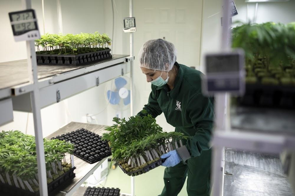 Almal wil cannabis boer, selfs Noord-Macedonië