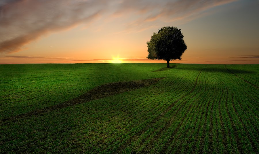 by Ash Vain - Landscapes Prairies, Meadows & Fields