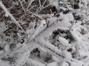 Photo: 06.Ponieważ rano widoków jest niewiele, więc podziwiamy głównie różne lodowe cudeńka np. taki piękny szron na krzakach i drzewach.