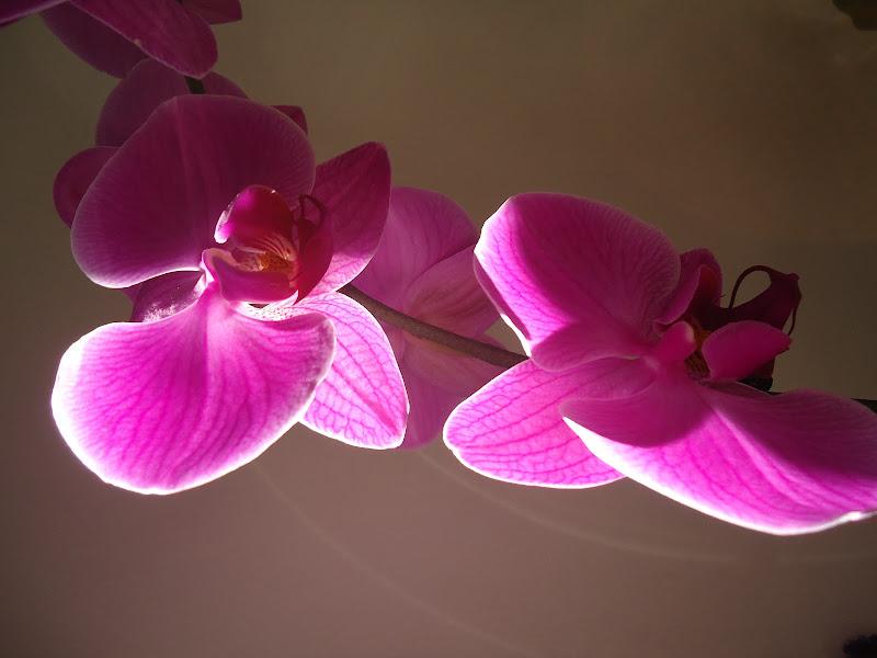 L'orchidea baciata dal sole di FLORANS