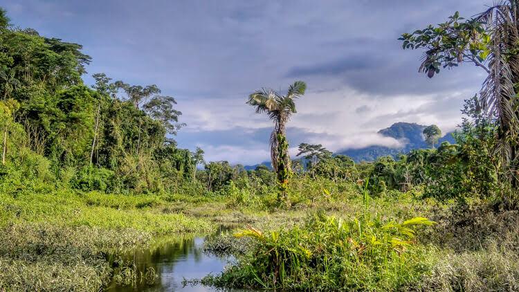 amazon forest peru.jpg