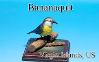 Bananaquit ‐Virgin Islands, US‐
