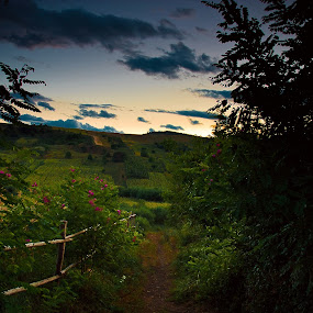 The Dream of a Summer Day by Eduard Moise - Landscapes Prairies, Meadows & Fields ( fence, purple, twilight, path, flowers )
