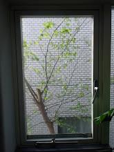 Photo: 雑草からここまで育った謎の木