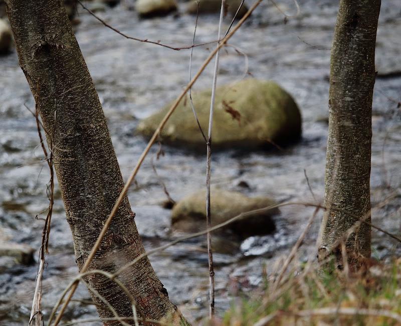pietra di fiume di ottavioart