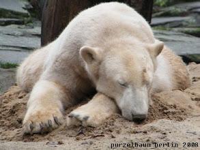 Photo: Knut genehmigt sich ein Nickerchen ;-)