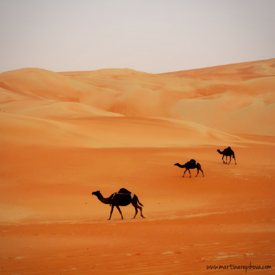Camels in the desert, UAE (Original photo)