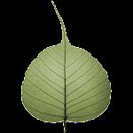 Bodhi Timer Icon