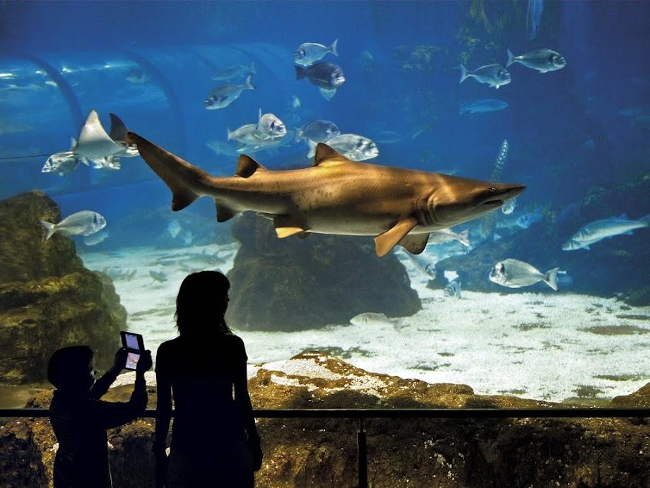 Foto Aquarium - El Acuario de Barcelona 13