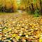 2012-Autumn Road Pixoto.JPG
