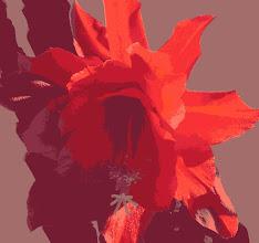 Photo: Red Cactus