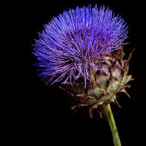 by Vladimir Jablanov - Nature Up Close Flowers - 2011-2013