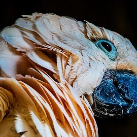 birds by Paul Drajem - Animals Birds ( birds,  )