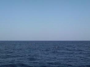 Photo: 朝からずーっと 水面に鳥、つっこみっぱなし! ・・・アンカー打ってるもんで。 近くにきたときは、キャストしてみたんですが・・・微妙に届かない。  くやしいー!!