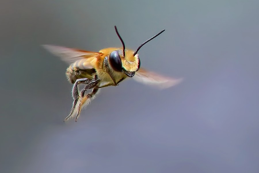 Solo flight by Yoce Mocodompis - Animals Insects & Spiders