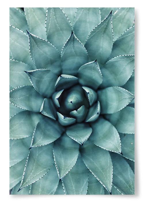 Poster Taggig Växt