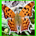الفراشة الجميلة اللغز! لعبة icon