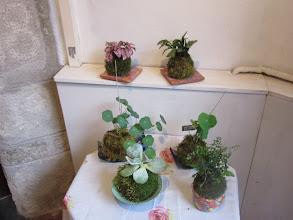 Photo: plusieurs kokedamas différents  tarif: 10 euros environ pour chaque kokedama