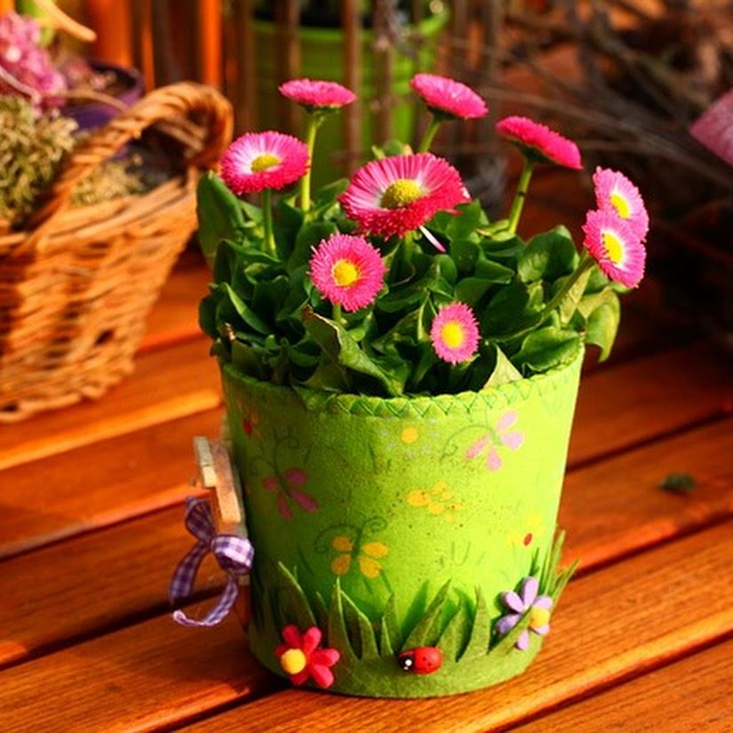 consejos cuidar plantas