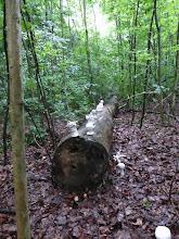 Photo: Waldbäume aus Ton Johanna Steffens mit der Klasse 6a des Graf-Zeppelin-Gymnasiums