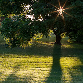 Long Shadows  by Kevin Frick - Landscapes Sunsets & Sunrises ( shadow, sunburst, grass, tree )