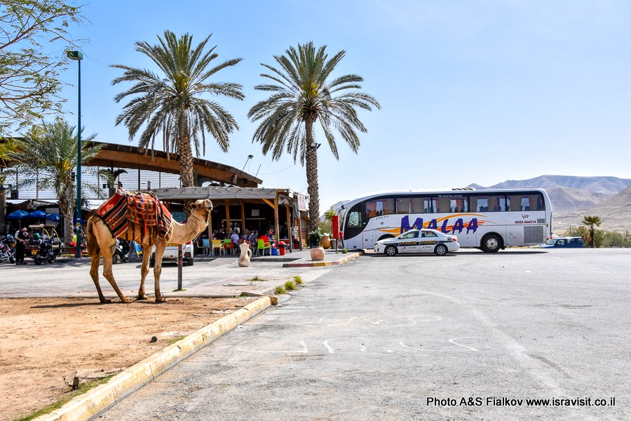 Перекресток Альмог. Экскурсия по Иудейской пустыне.